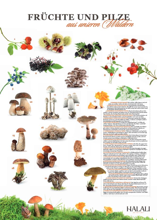 Poster Früchte und Pilze - (c) HALALI